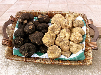 Italian Truffle Great Italy